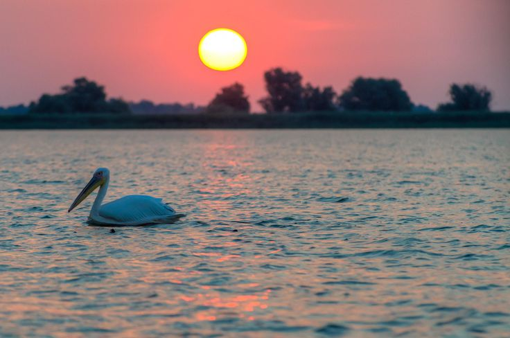 Photograph Alone in the sunset by Claudia Gadea on 500px