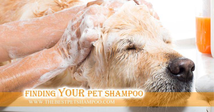 Dog Shampoo Article On How To Wash a Dog