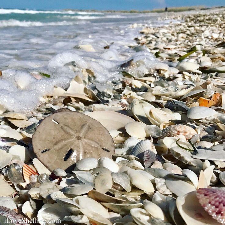 Arena dólar en sanibel captiva cayo costa playa