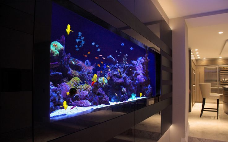 Your fantasy for a good #aquarium ends here