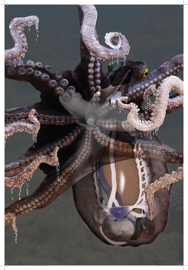 """How to make an octopus: Anatomical octopus illustration """"assembly"""" shown step-by-step by Mieke Roth"""