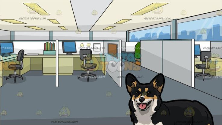 A Pretty Corgi Pet Dog With Office Cubicles Background:  A dog with black beige and white fur standing ears staring ahead while parting its lips to reveal a pink tongue and An office with cubicles and white dividers gray swivel chairs paneled ceiling gray floor beige desks with gray monitors