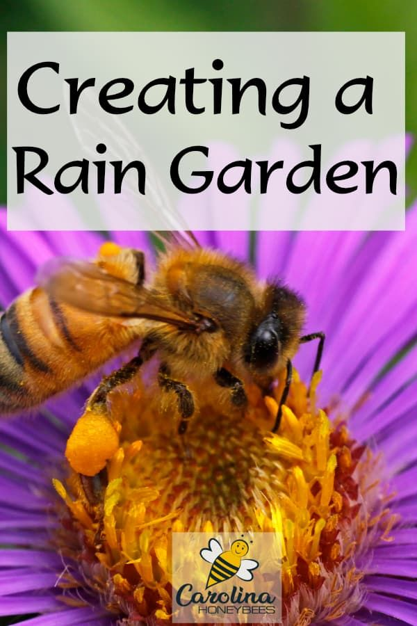 Increase Bee Habitat With Rain Gardens (With images ...