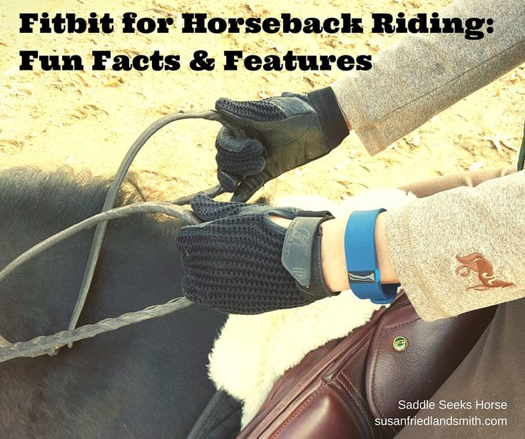 Fitbit for Horseback Riding: Fun Facts