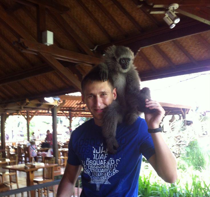 #bali #zoo #brothers #monkey #gibbon #fun