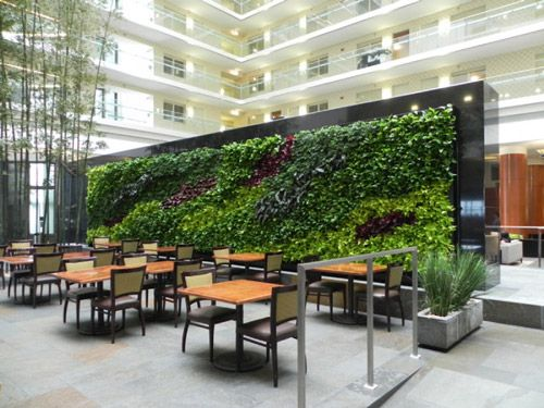 Green walls, also known as living walls, plant walls, bio walls or vertical gardens, are popular on building exteriors, but they offer indoor benefits too.