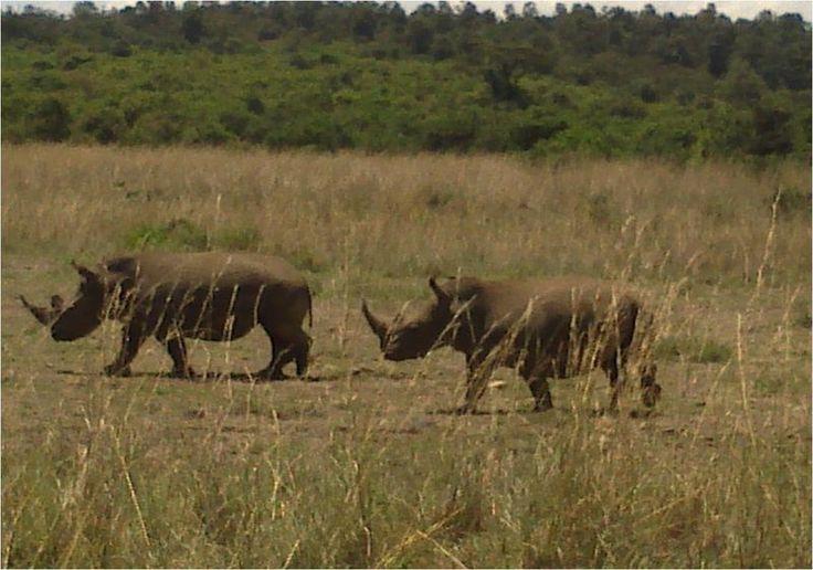 MEMORABLE TOUR IN KENYA DESTINATION: NAIROBI/AMBOSELI/TSAVO WEST DURATION: 5 DAYS 4 NIGHTS  TOUR ITINERARY Day 1: Nairobi Day 2: Amboseli Day 3: Amboseli Day 4: Tsavo West Day 5: Tsavo West