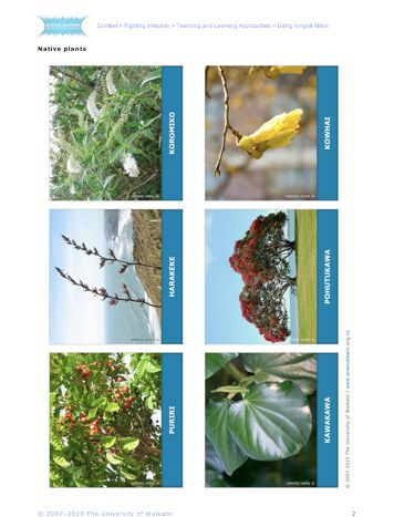 Student Activity - Using rongoā Māori -  In this activity, students learn about rongoā Māori (medicines that are produced from native plants in New Zealand) through a silent card game.