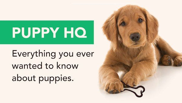 5 Essential Training Tips For Every New Puppy Puppies Dog