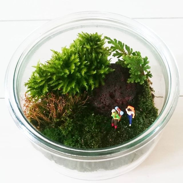 キャプション→. #苔リウム . オットのミニ盆栽から 色々な種類の苔を拝借 . . #テラリウム#苔テラリウム#マン盆栽#WECK ユーザー→miho.hiko.k