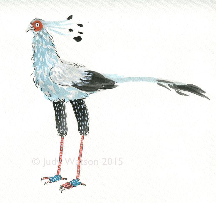 Watercolour Leonard - auditioning for the part #secretarybird #bird #leonarddoesntdance #picturebook #charactersketches #franceswatts