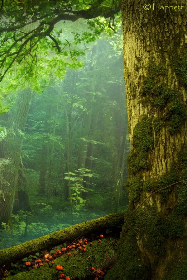 Tree Trunk With Forest Trees Men/'s Tee Image by Shutterstock