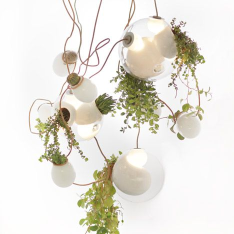 hanging light plants