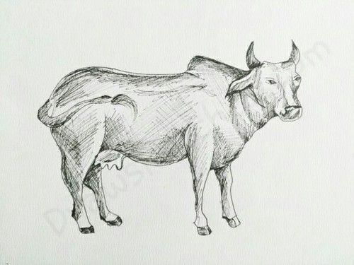 how to draw a cartoon cow step by step easy