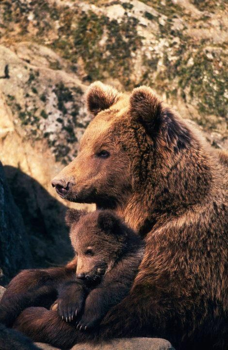 A brown bear cuddling her bear cub in her arms.