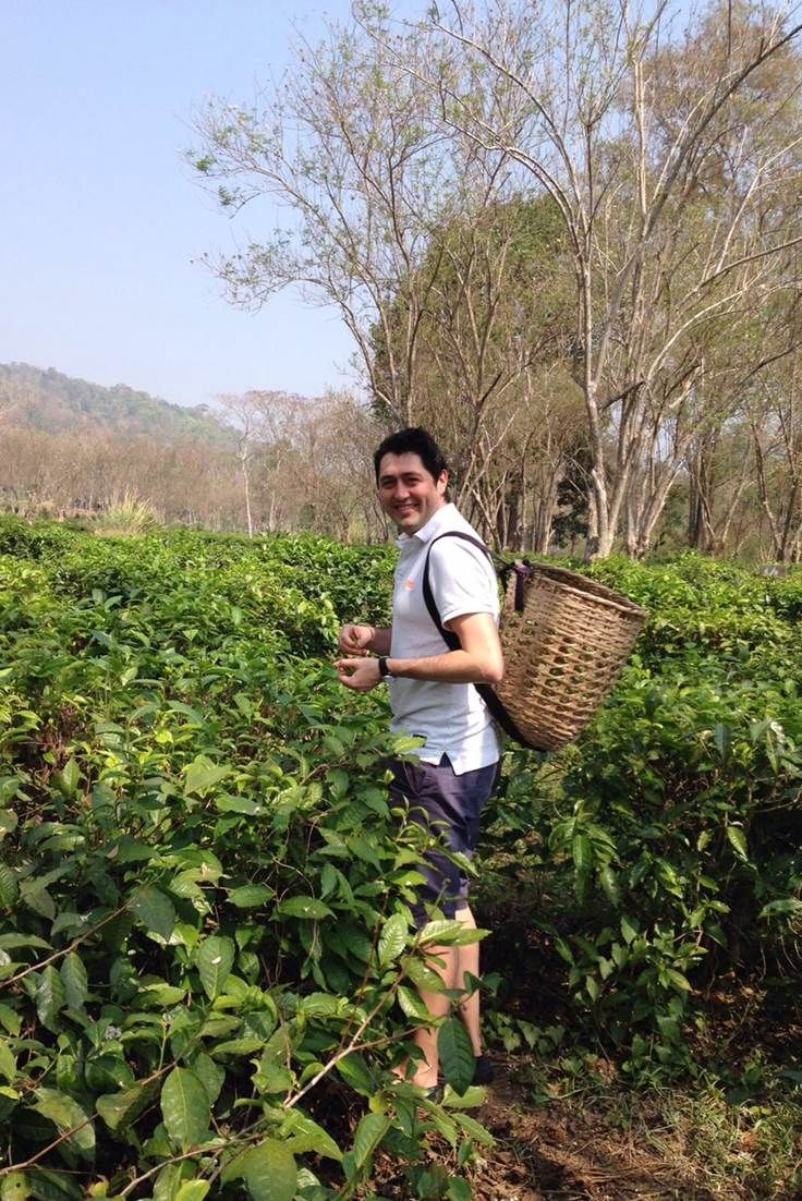 Orient Product Manager enjoying his tea picking experience in Thailand #Travel
