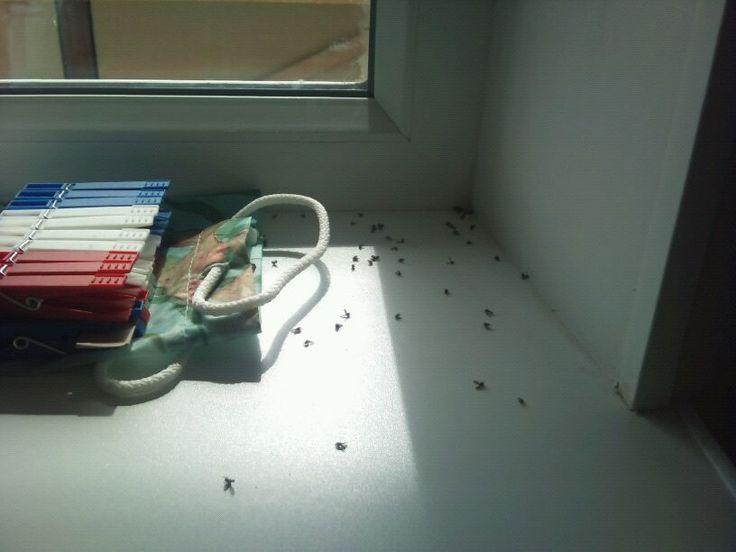 Дешево и сердито: избавляемся от комаров и мошек