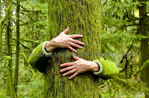 Beaucoup se sont posés la question de savoir comment se ressourcer naturellement grâce aux arbres, comment obtenir de l'énergie via les arbres, comment apa