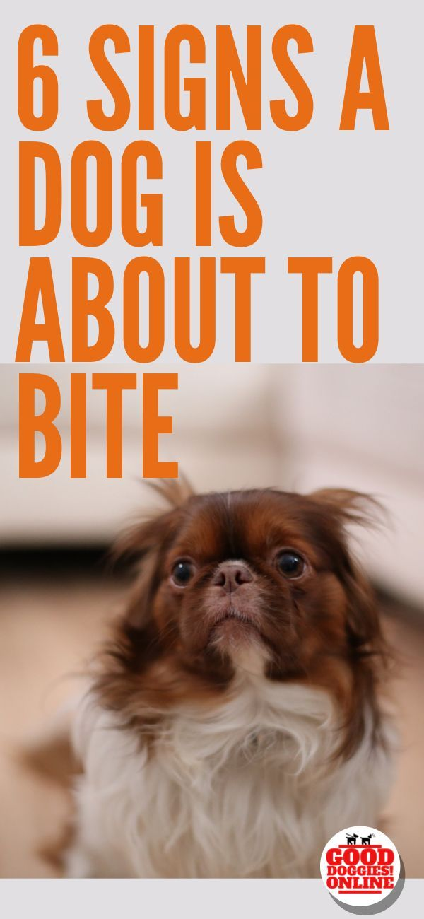 6 Signs That A Dog Is About To Bite Dog Training Dog Behavior Dogs