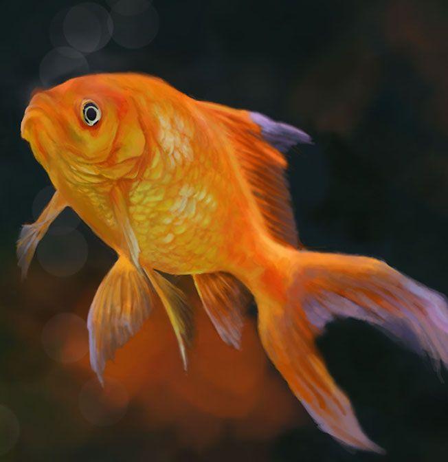 Pittura digitale: Pesce rosso Digital Painting: Goldfish by Elisa Ferrotto