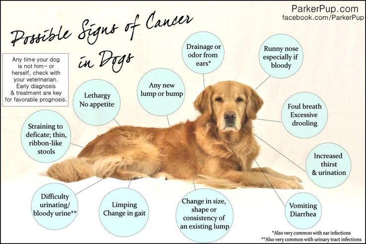 It's always good to check your dog for lumps and bumps. Checking about once a month is a good goal. But there are other things you can watch for, too. These don't necessarily mean cancer (they could be any number of things), but if you have any suspicions, it's good to get it looked at. 1 in 4 dogs will die from cancer according to my friends at Morris Animal Foundation. A sad statistic. Hope this diagram comes in handy for you.  #pethealth #doghealth #cancerprevention #dogs