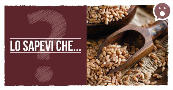 Lo sapevi che il #FARRO è un alimento naturalmente biologico, perché per tradizione viene coltivato senza concimi chimici, pesticidi e diserbanti? Più proteico degli altri cereali, ricco di fibre e poco calorico.