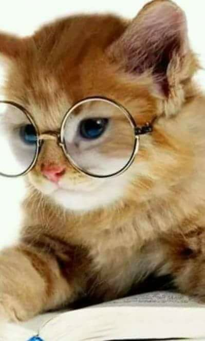 Harry Potter glasses and a kitten my dream pet!!!