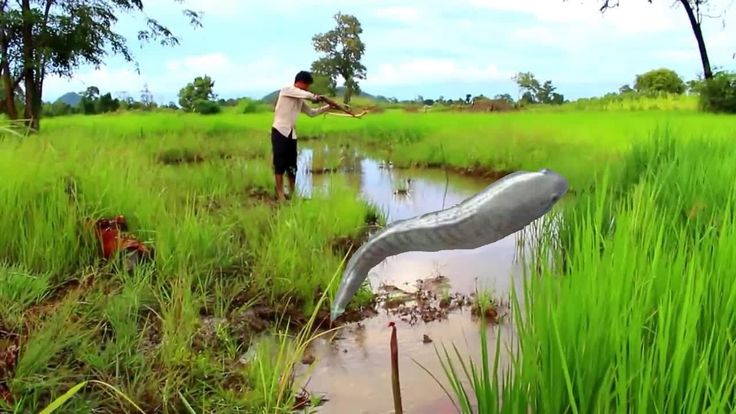 Cambodia Net Fishing at Pursat Province  and Traditional Net Fishing Part 2