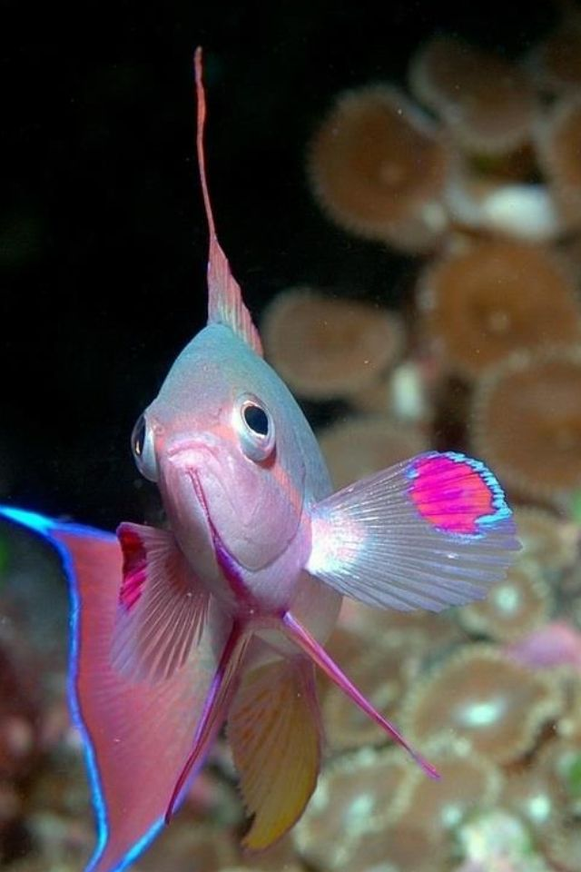 73 best images about mundo marino on pinterest for Colorful freshwater aquarium fish