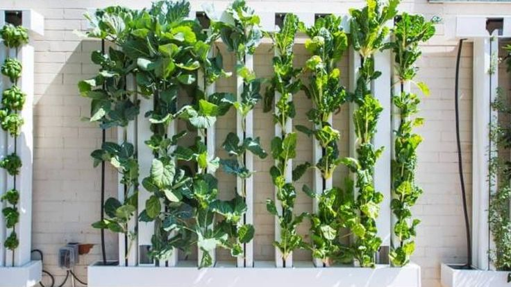 New vertical garden allows Cloverdale food bank to serve up fresh greens - British Columbia - CBC News