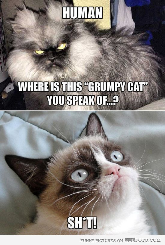 45 best colonel meow images on pinterest cats grumpy