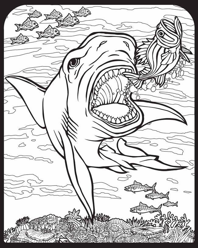 201 best Shark Week! images on Pinterest | Shark week, Sharks and ...