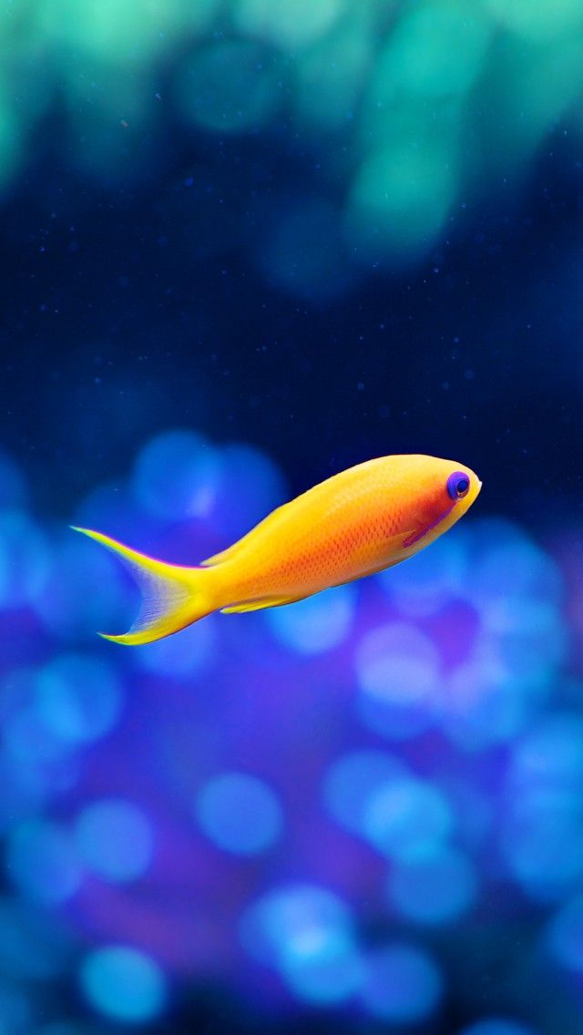 Pin By Zenzone On Iphone Wallpapers Fish Wallpaper Live