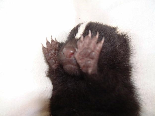 Timidez: 16 Animal, Animals Plants Fungi, Funny, Wittl Animal, Baby Animal, Pet Skunks, Animal Affliction, I'M, Shy Animal