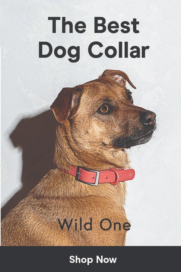 Harness Walk Kit Dog Training Dog Leash Training Dog Training
