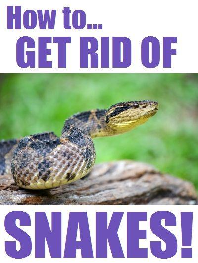 13 Best Snake Repellent Images On Pinterest