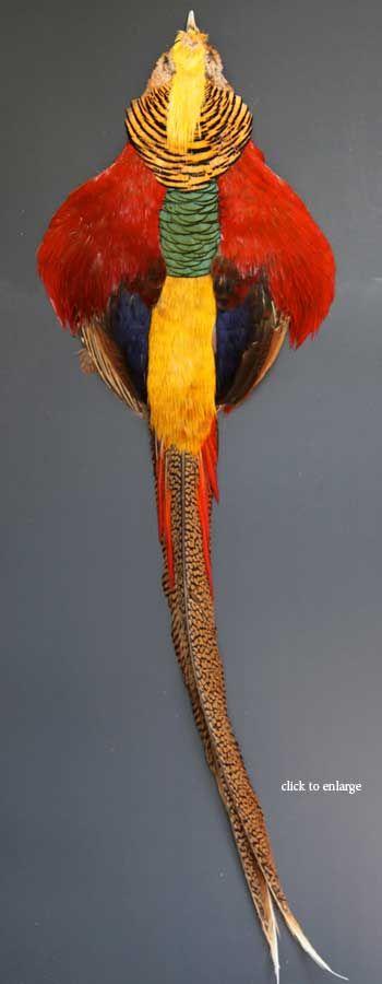 Golden Pheasant Feathers | Atlantic Salmon Fly Tying Materials | Classic Salmon Fly Tying Feathers