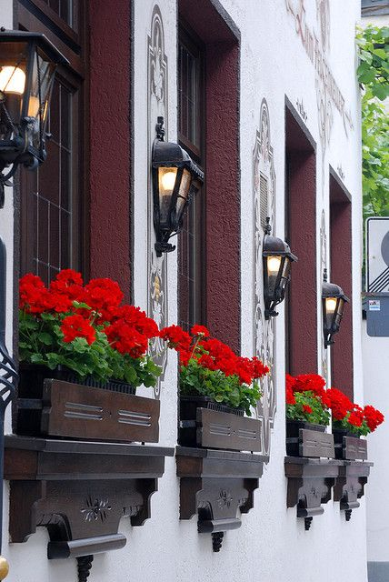 Red geraniums in fabulous window boxes!