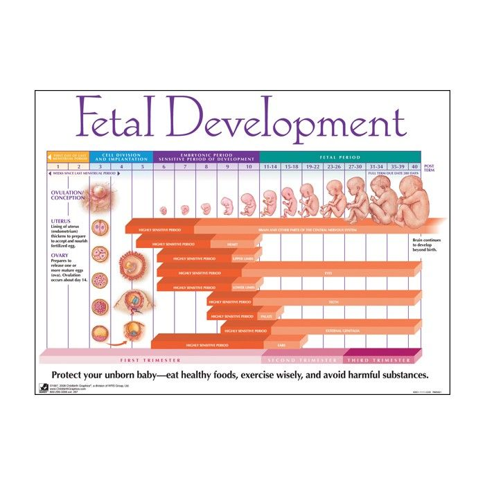 the timeline of the development of a child in the uterus from the embryo stage Life begins at fertilization development of the embryo begins at stage 1 when a , from the time of conception to the end of the second month in the uterus.