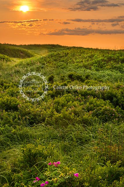Field of Green Photography Backdrop. Floral and greenery at Cavendish Beach Park, PEI. To order backdrop visit www.backdropscanada.ca