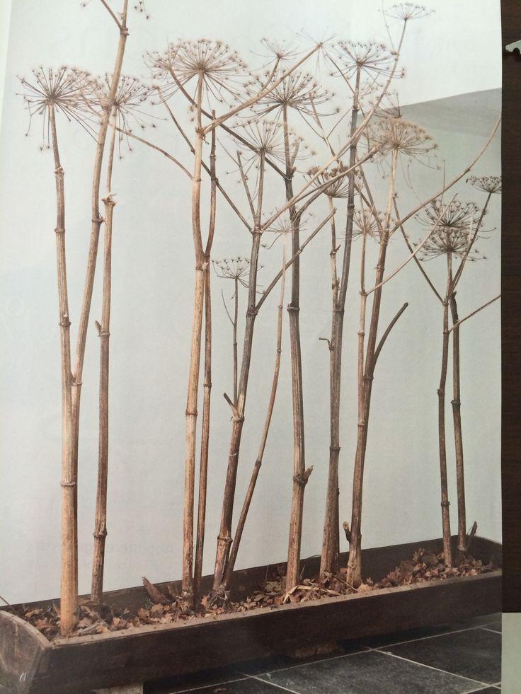 Uitgebloeide berenklauw in een houten bak: laag klei op de bodem met daarop een laagje dorre bladen