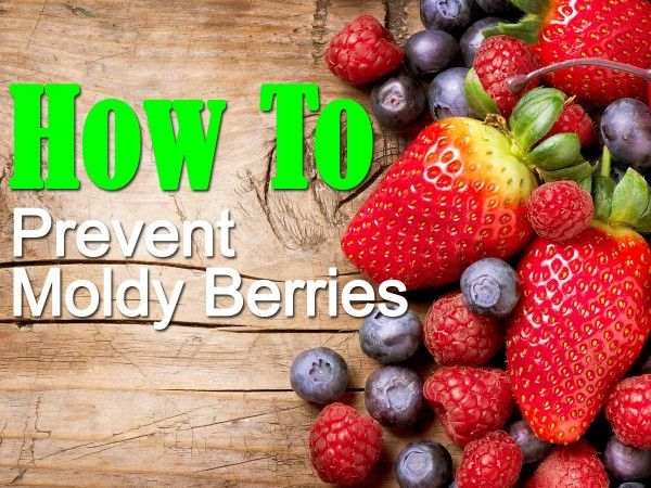 1. As soon as you get the berries home, prepare a mixture of one part vinegar to ten parts filtered water into a bowl; apple or white cider vinegar works best. 2. Dump the fresh berries you recently purchased into and give them a good swirl and rinse. 3. Rinse the berries a final time . 4. Lightly pat the berries with a paper towel, and place the bowl into the refrigerator.