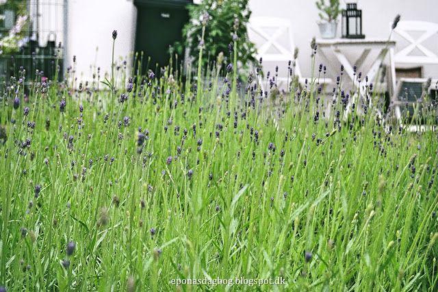 Blomsterende have - hele sommeren