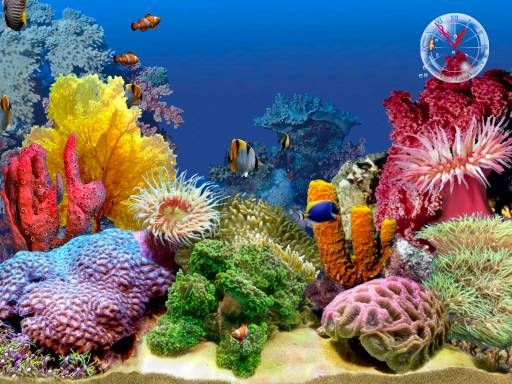 exotic fish tanks