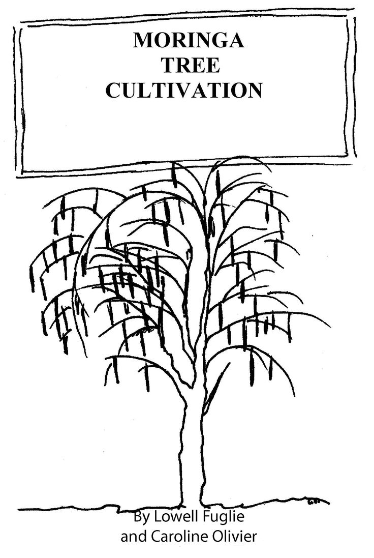 How to Grow the Moringa Tree