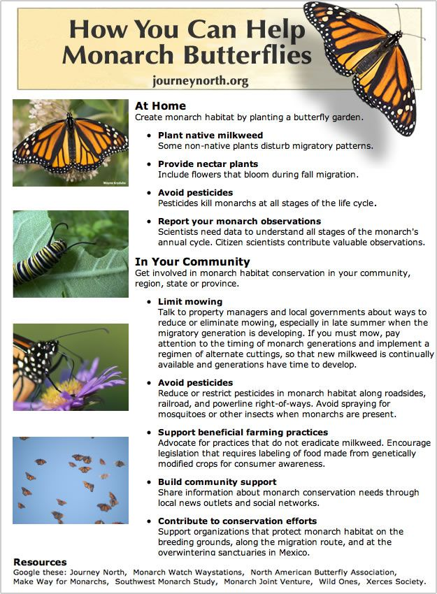 How You Can Help Monarch Butterflies