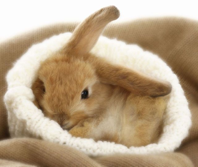 This adorable little bunny looks so cozy!:
