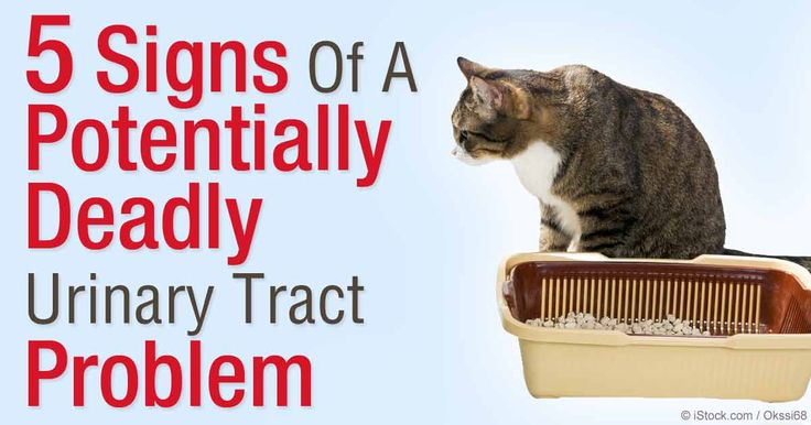 signs of urinary tract infection in cats