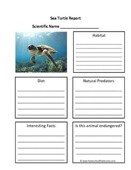 This is a fill in the blank Sea Turtle worksheet.  These animal report worksheets encourage the student to research the animal's scientific name, habitat, diet, predators, endangered status and more.  This worksheet fits into STEM curriculum for grades Kindergarten, First Grade and Second Grade.