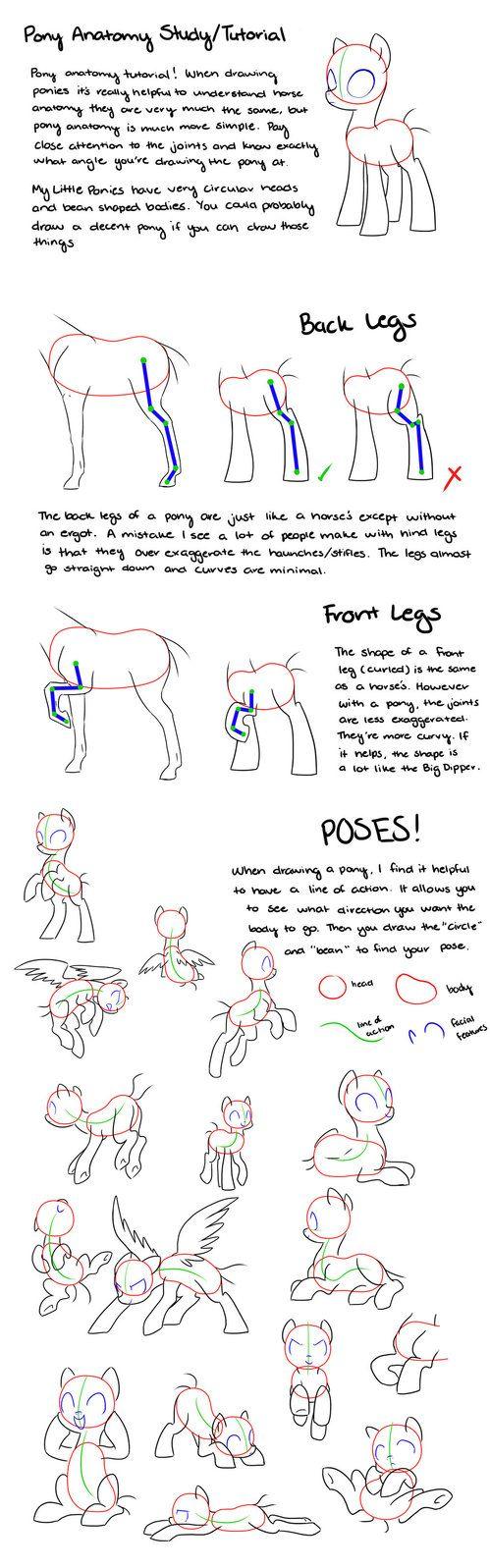 Pony Anatomy Tips/Study/Tutorial